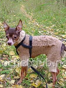 Вязаный костюм для собачки